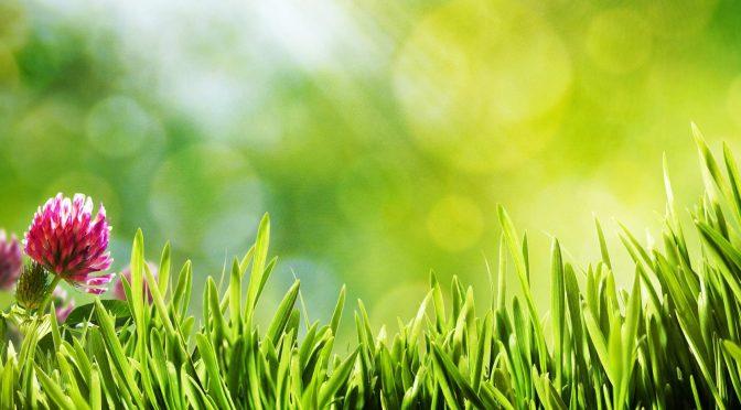 Студенти нашої кафедри приймали участь в озелененні Житомира